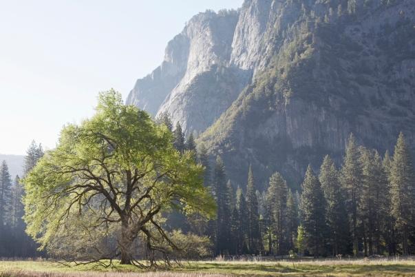 JM150417_Yosemite_047_rt